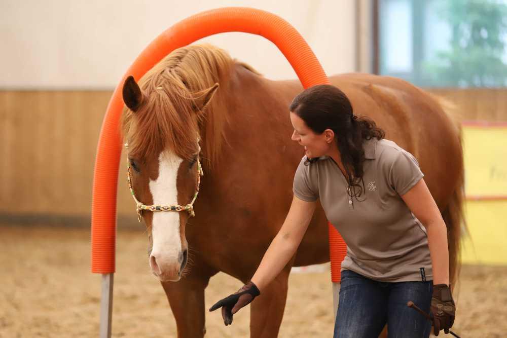 Pferd_am_Mensch_Horse-Agility