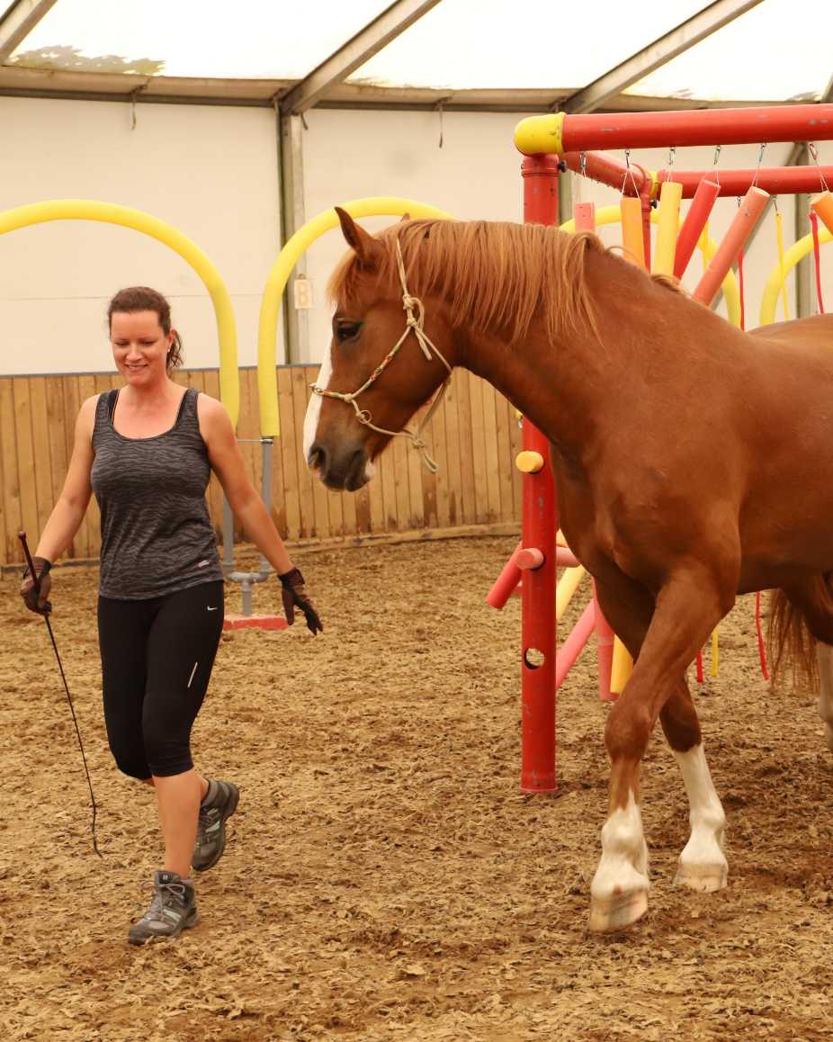 Pferd_am_Mensch_Horse_Agility_Unterricht