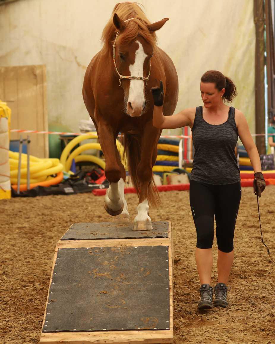 Pferd_am_Mensch_Trainerin